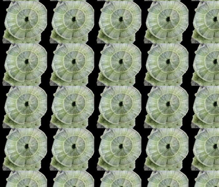 Gems 231