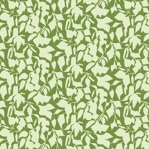 birch leaves on green medium