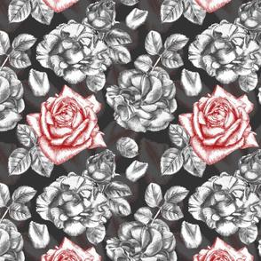 One dark red rose