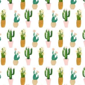 Cactus Plants 8 inch