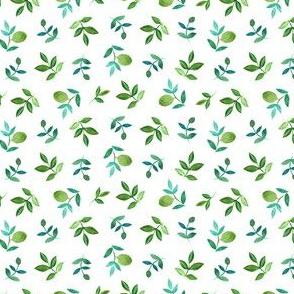 Olives, Olea europaea