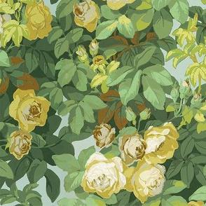 Roses Jaunes 1a
