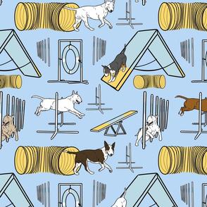 Simple Bull Terrier agility dogs - blue