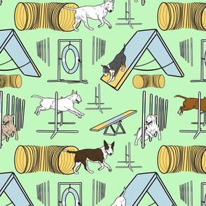 Simple Bull Terrier agility dogs - green