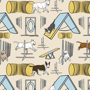 Simple Bull Terrier agility dogs - tan