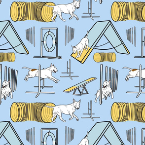 Simple white Bull Terrier agility dogs - blue