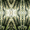 Rosemary_lattice