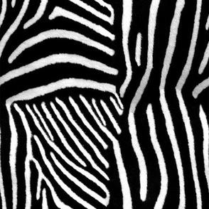 furry zebra print