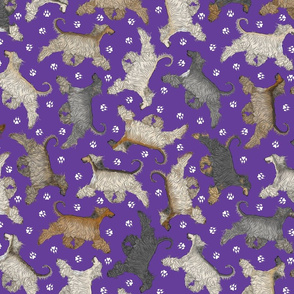 Trotting Afghan Hounds and paw prints - purple