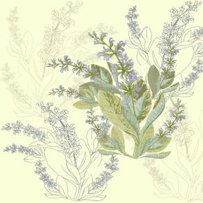 Sage_floral_botanical