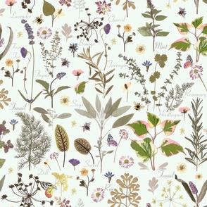 herb garden mint