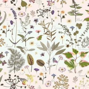 herb garden mint blush ombre jumbo