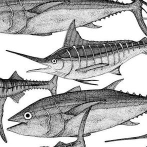 Atlantic fish black white