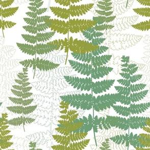 Cool summer ferns
