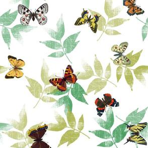 butterflys_fq_wgreen_leaves