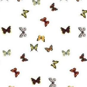 butterflys_fq