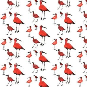 ibises  on white