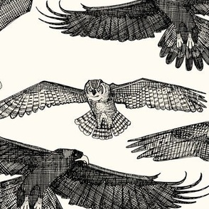 birds of prey black