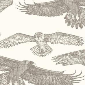 birds of prey natural