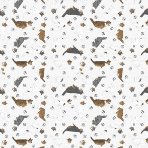 Tiny assorted Collies - gray