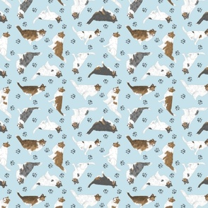 Tiny assorted Collies - blue