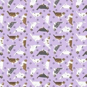 Tiny assorted Collies - purple