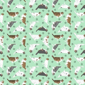 Tiny assorted Collies - green