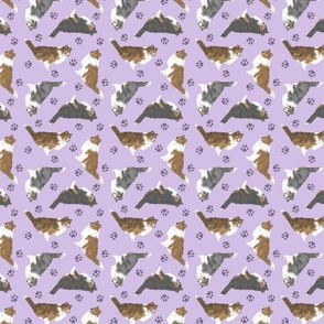 Tiny Rough coated Collies - purple