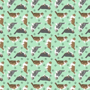 Tiny Rough coated Collies - green