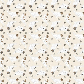 Tiny color head white Rough Collies - tan