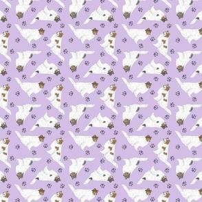 Tiny color head white Rough Collies - purple