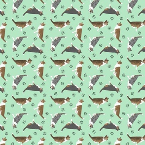 Tiny Smooth coated Collies - green