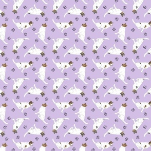 Tiny color head white Smooth Collies - purple