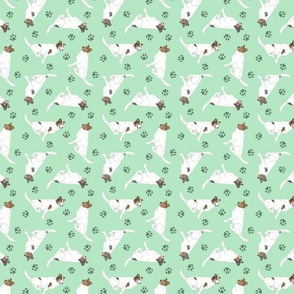Tiny color head white Smooth Collies - green