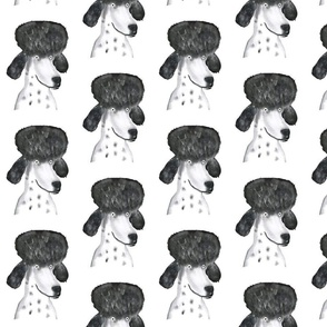 Portret of a poodle