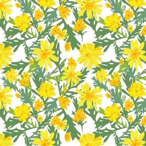 Garden Daisies (transparent background)
