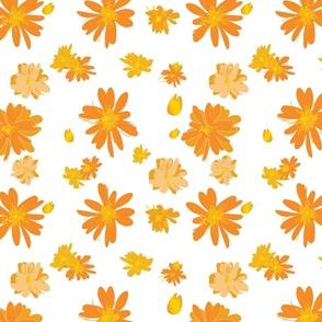 Orange Daisies (transparent background)
