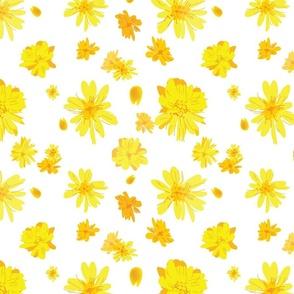 Sunshine Confetti (transparent background), Daisies Collection