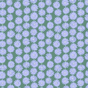 chicory flowers line drawing floral on sage green