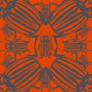 Colorado beetle dark orange