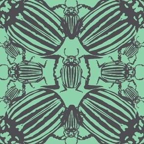 Colorado beetle light green