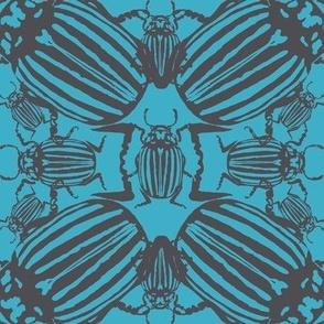Colorado beetle turquise blue