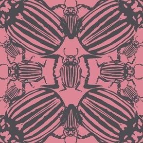 Colorado beetle pink