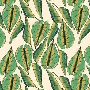 tropicali botanicals 3