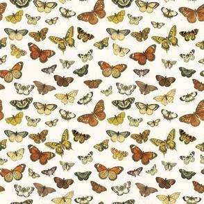 Butterflies Au Naturel // small