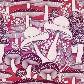 fall fungi reds