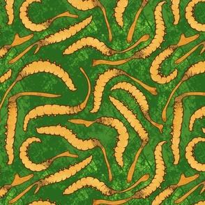 cordyceps caterpillars