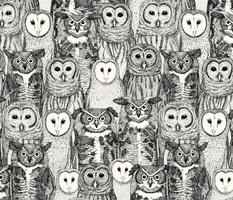 owls NC black