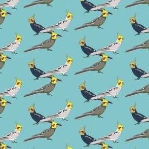 Cockatiels - Blue