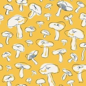 Hillside Mushrooms in Sunshine